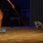 PETS_PC_CAT_TRAIN_