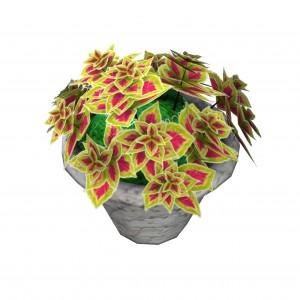 plantpottedcoleus