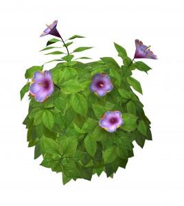 shrubhulagirlhibiscus